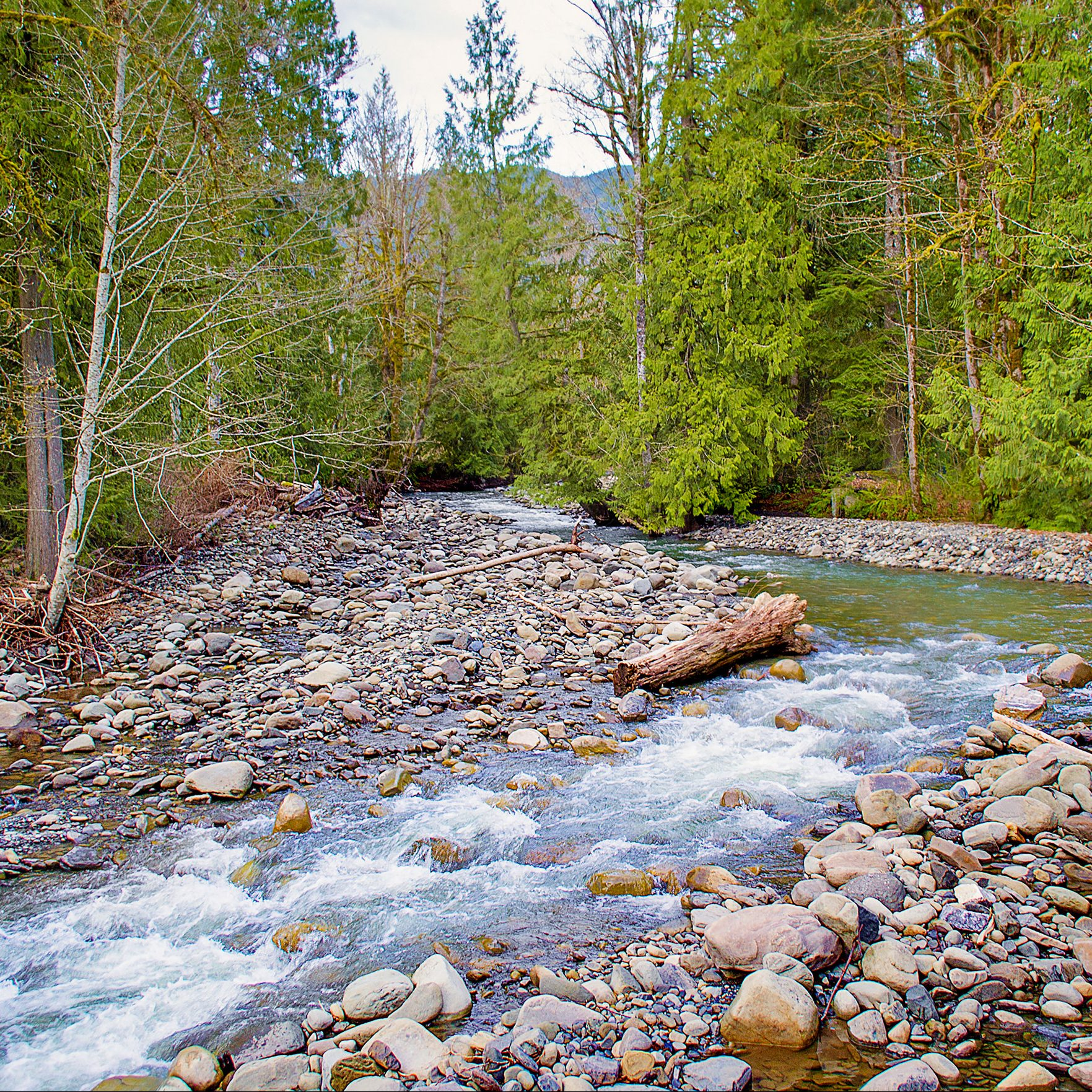 The Case Against a Water Right Adjudication in the Nooksack