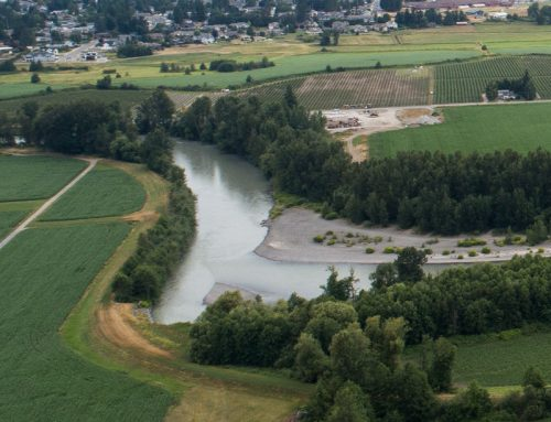 As drought worsens, Whatcom farmers call for immediate action to protect fish, farming