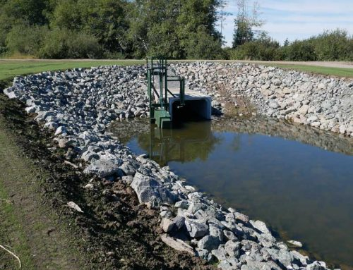 New salmon habitat project shows Whatcom farmers are serious about collaborating to restore fish